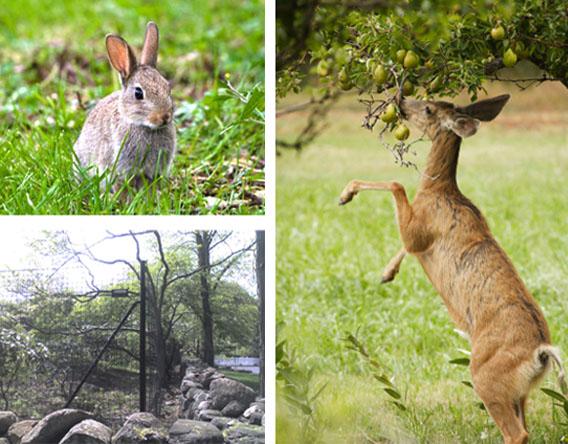 Is Wildlife Ruining Your Garden Deerbusters Canada
